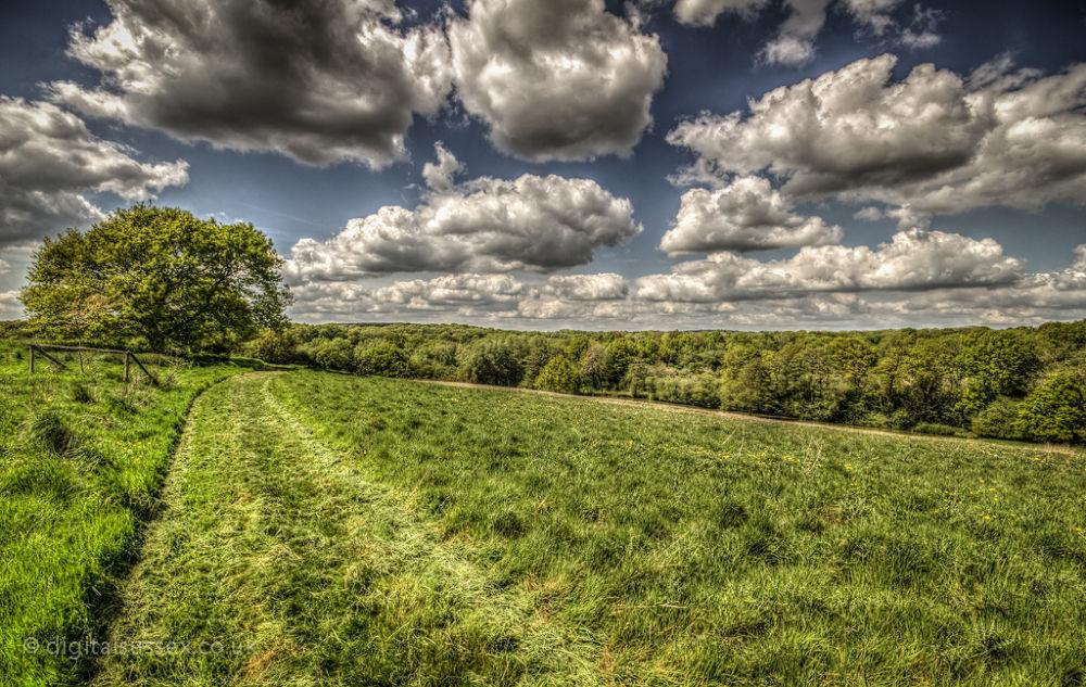 Grass track.jpg by DigitalSussex