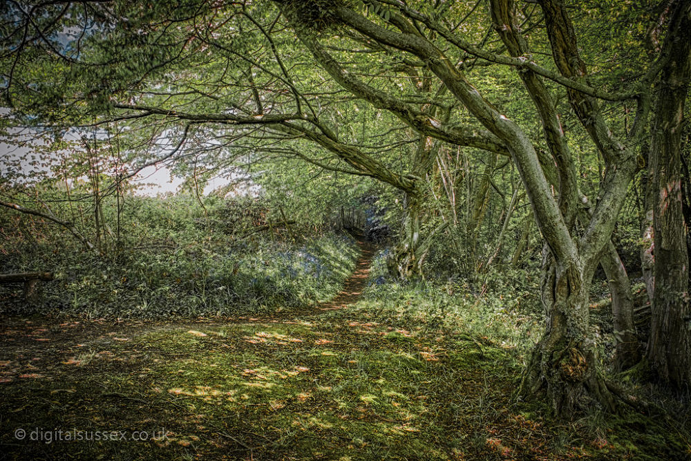 If you go down to the woods today.jpg by DigitalSussex