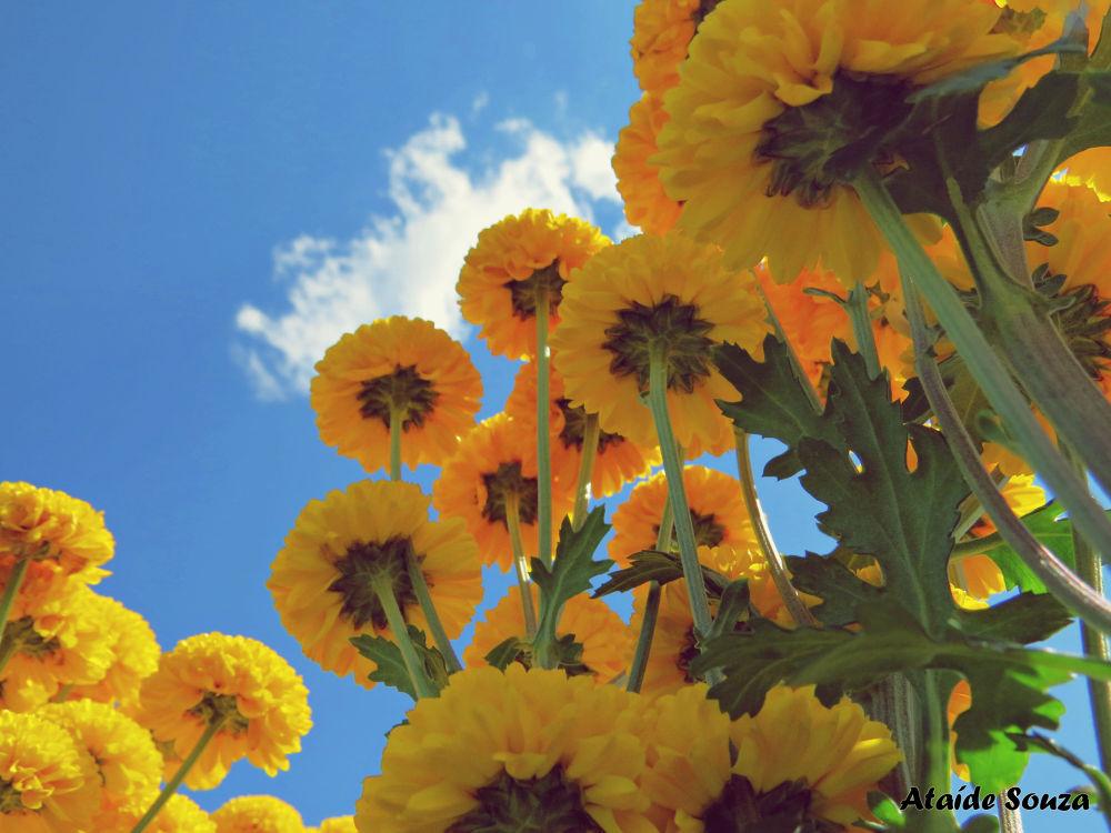 Photo in Nature #flower #sky #yellow #nature