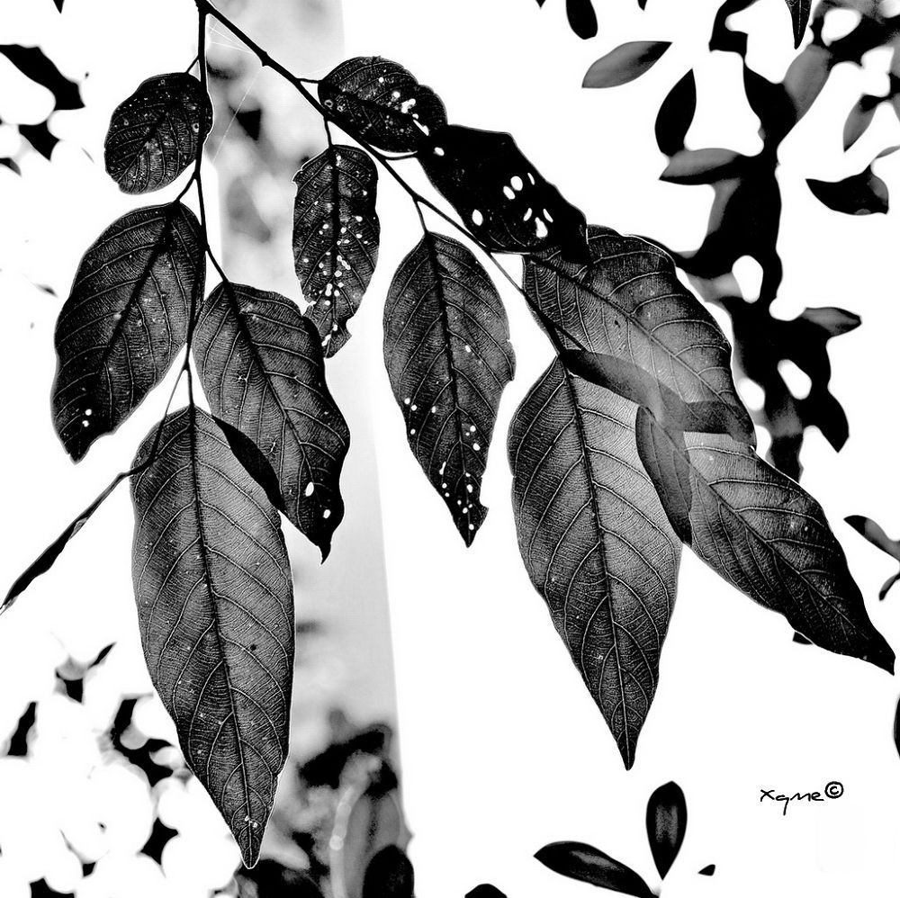 BW leaves by XQMe
