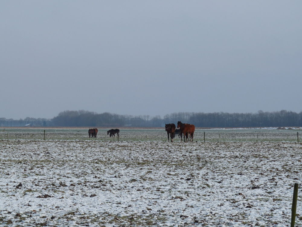 horses in the snow... by TheaPots