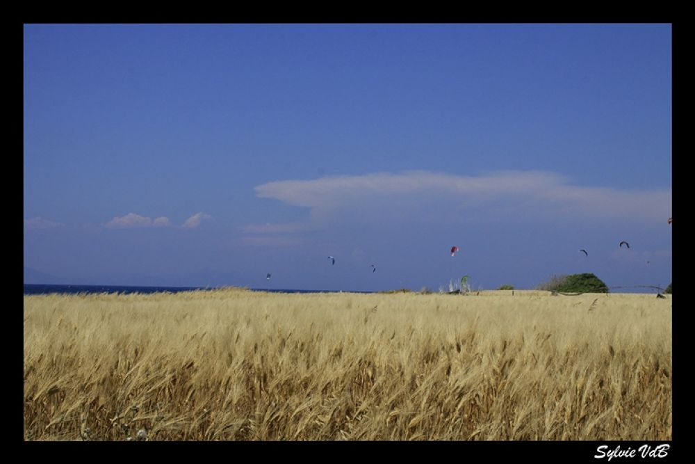 Blowing in the Wind by sylvievdbphotography