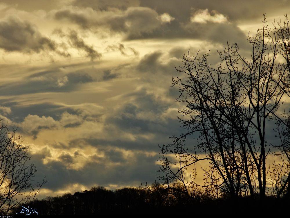 Jaunisse hivernale (c) by BRISYL