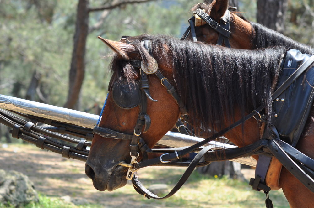 horse by ÖMER OSMAN İMECE