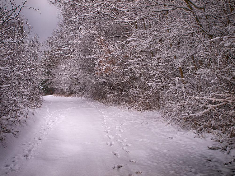 Path... by hristofortashev