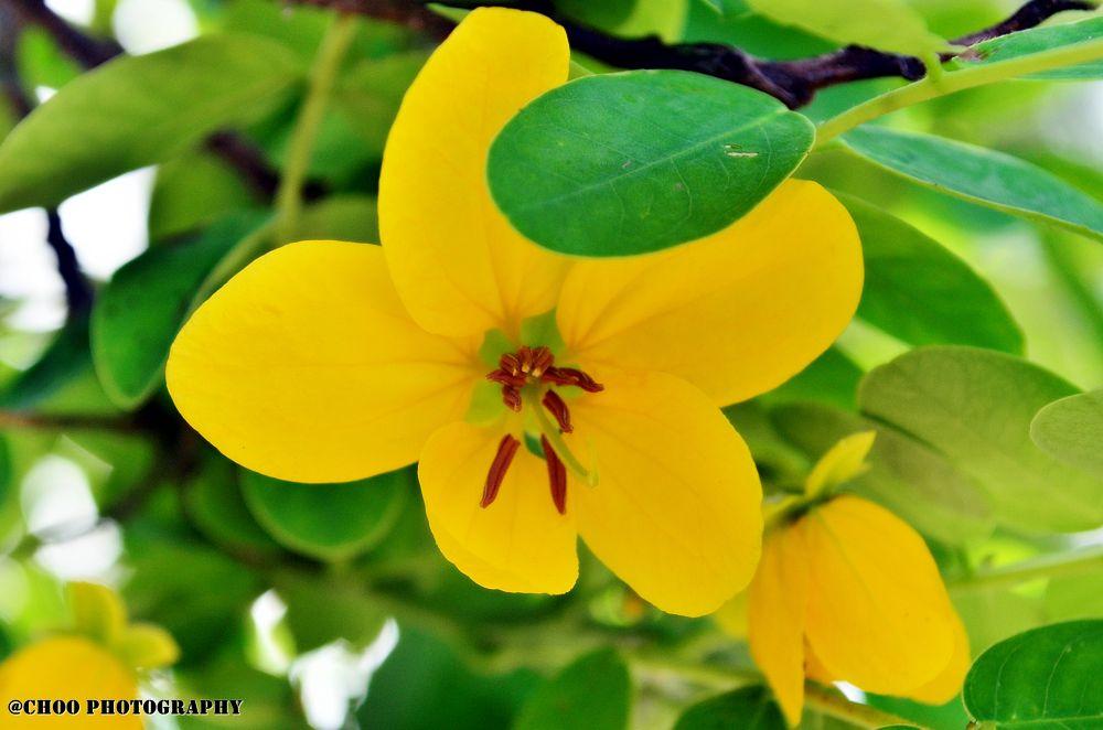 Yellow Humor by chooqlin