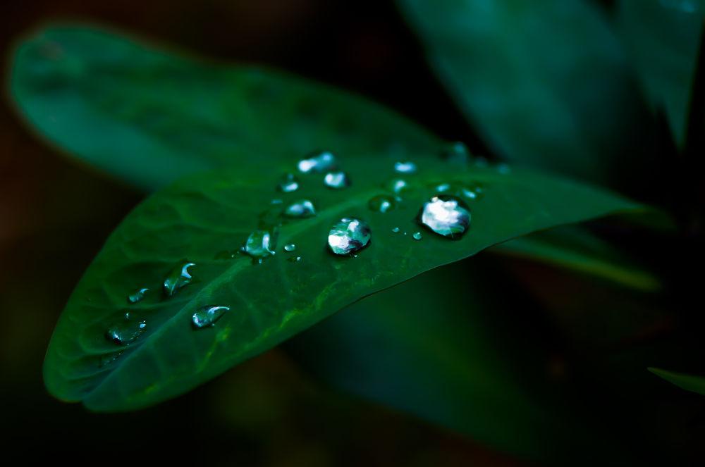 Pearl drops by Sinosh VA
