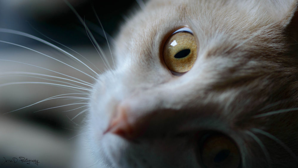 Wild Cat ...  by jessedevenon