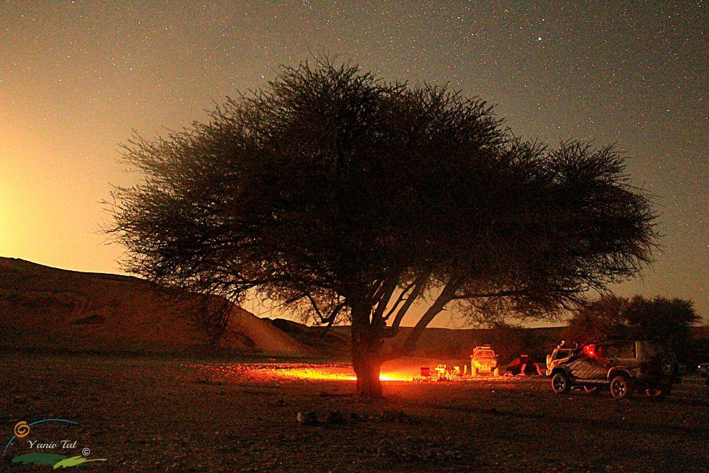 Desert Night by Yaniv Tal
