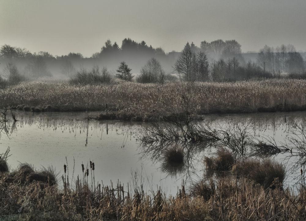 The Pond by ThomasHack