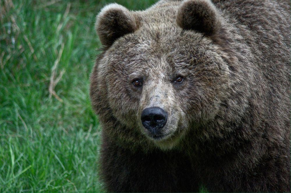 Big Teddy by ThomasHack