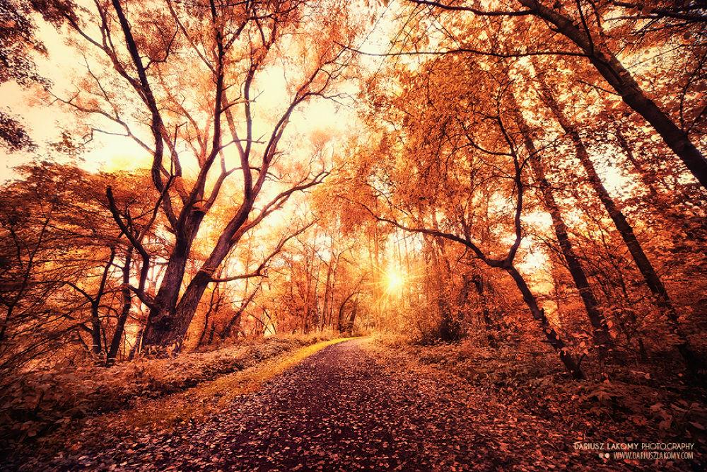 Autumn thoughts by Dariusz Lakomy