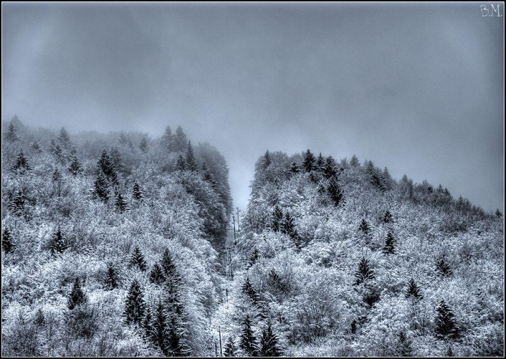 forest by borutmocnik1