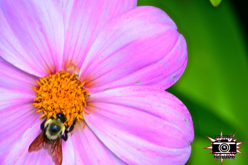 purple bee by Jodi Donkel