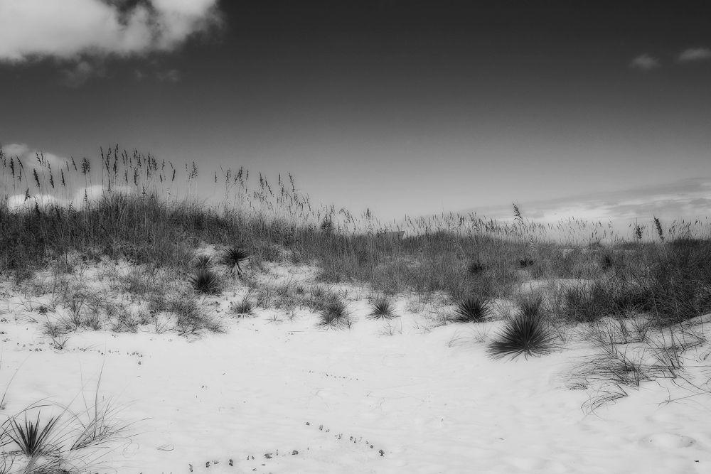 dunes by Jodi Donkel