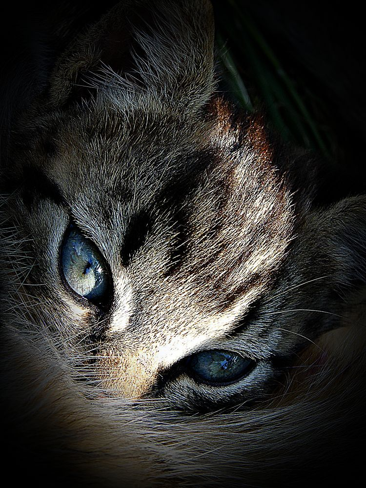 the cat by MCAdel