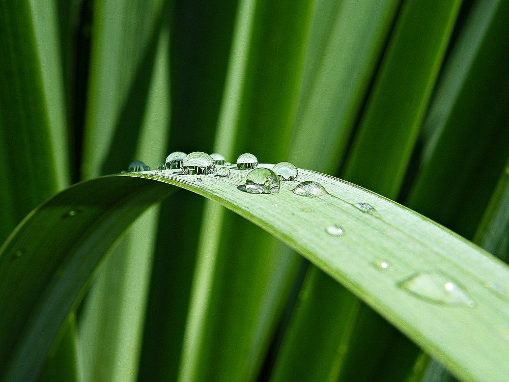 tears of dew by MCAdel