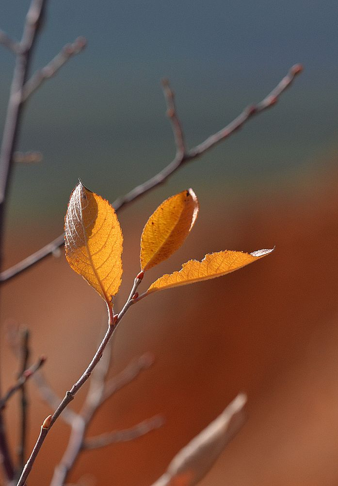 tree by MCAdel