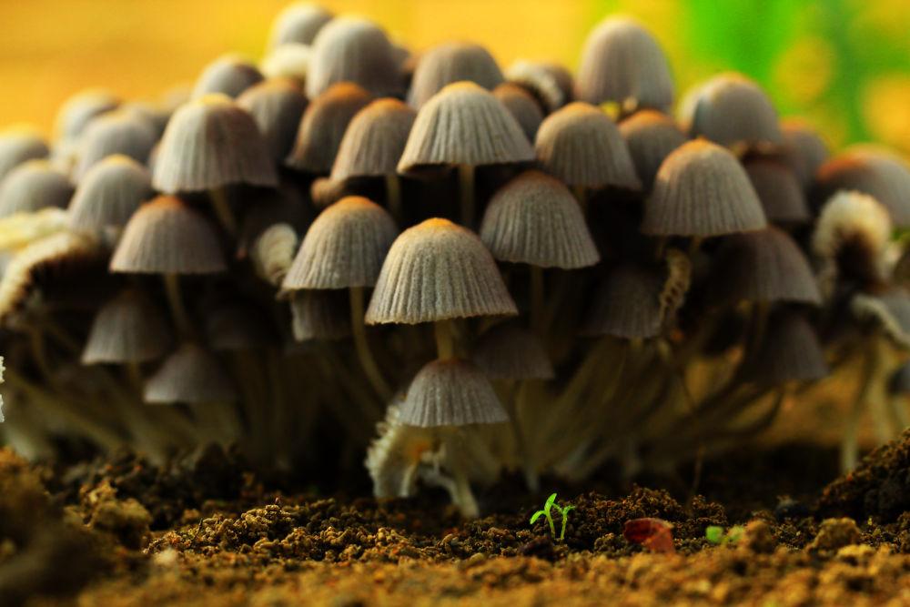mushrooms by yihwork