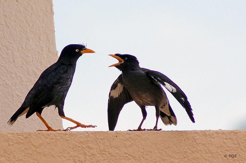 Angry Bird.jpg by Brian