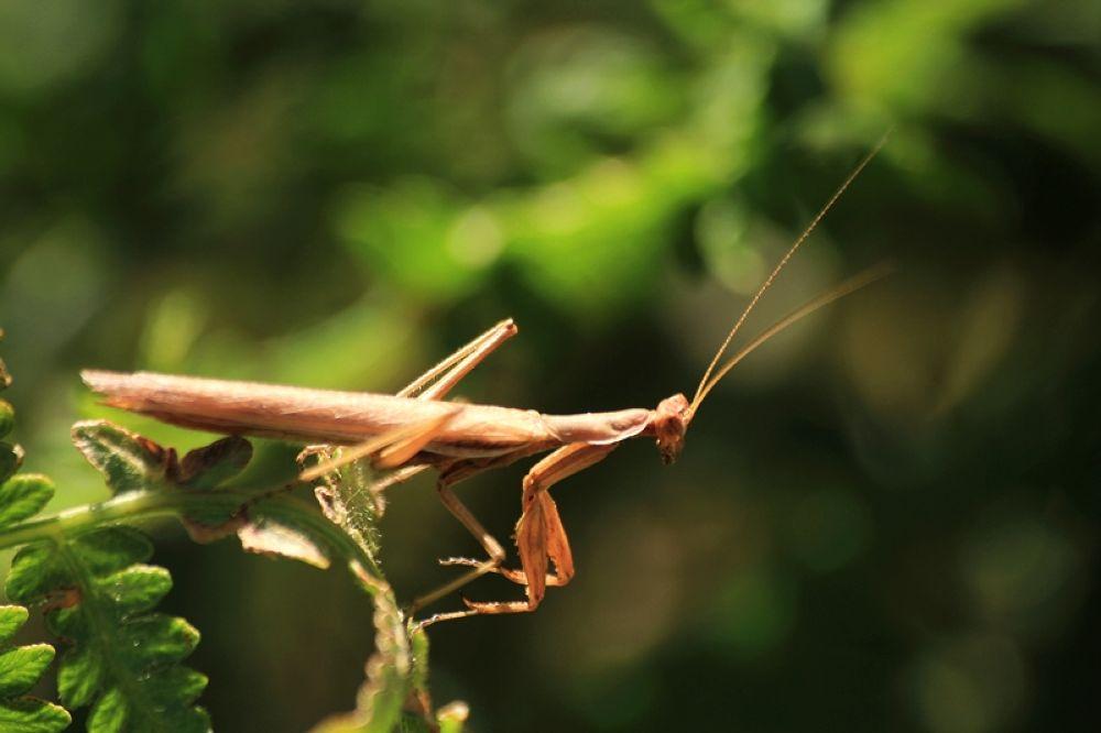 Mantis by filiz