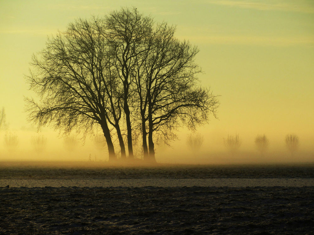 Foggy morning in Odijk by hugodejong35