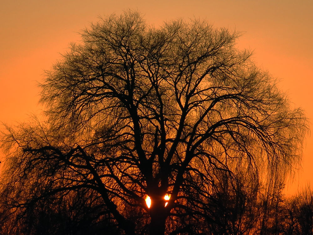 Photo in Nature #sunset #bunnik #netherlands #holland #winter #tree #sun #nature #landscape