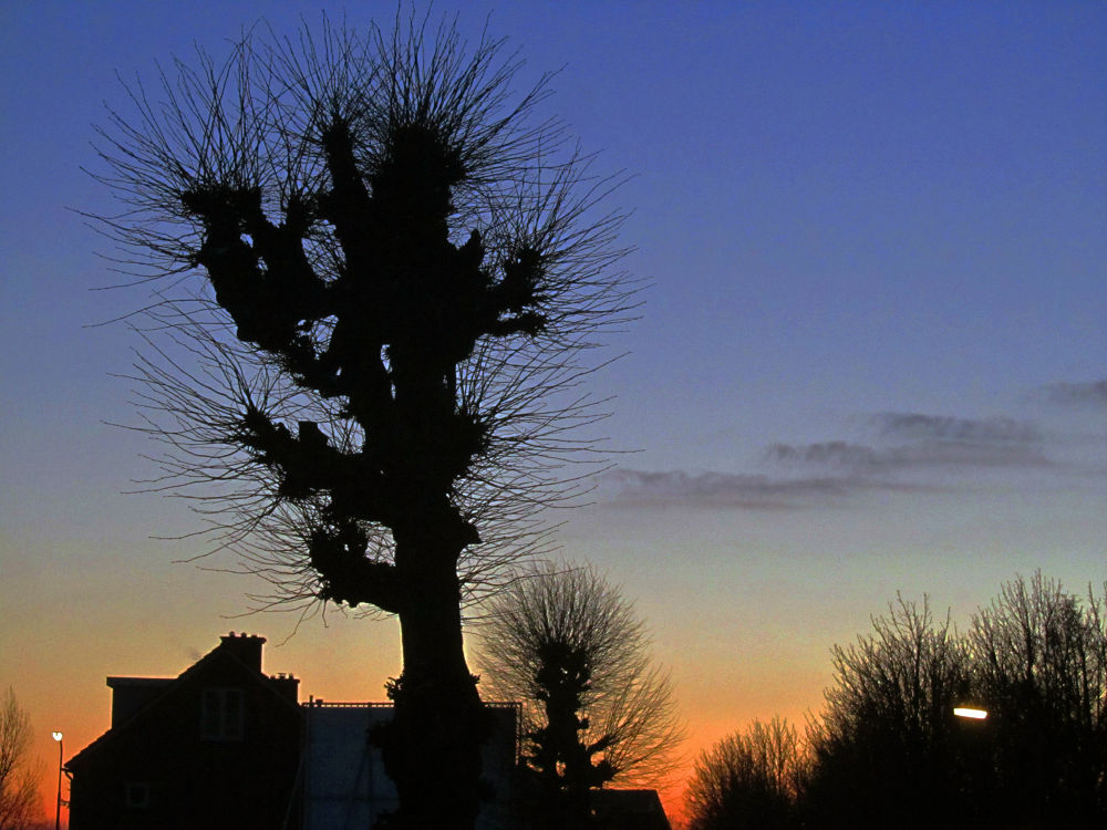 Typical dutch trees by hugodejong35