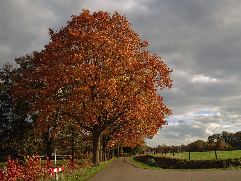 Autumn in Winterswijk by hugodejong35