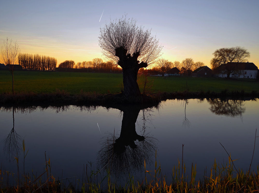 Typical dutch tree by hugodejong35