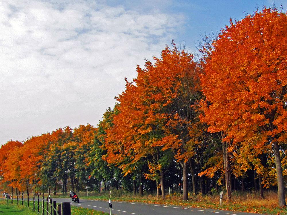 Autumn in Burlo by hugodejong35