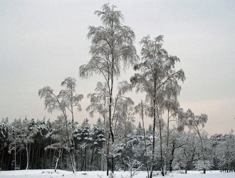 Photo in Nature #landscape #nature #snow #trees #driebergen #holland #netherlands #wood