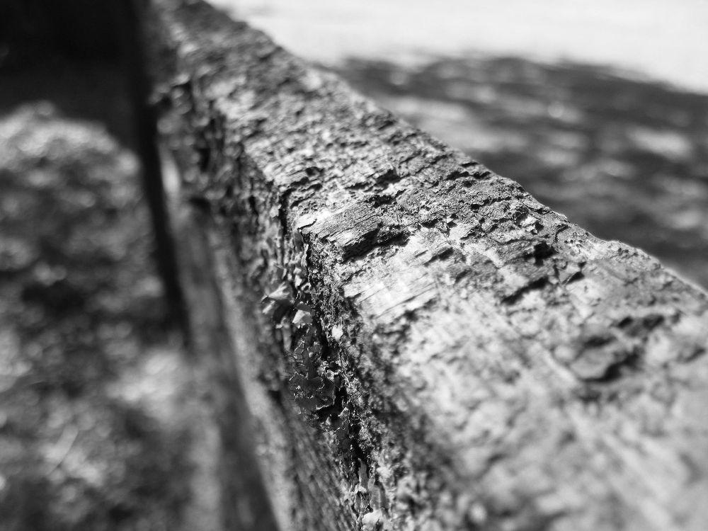 fence.jpg by PRAZZI