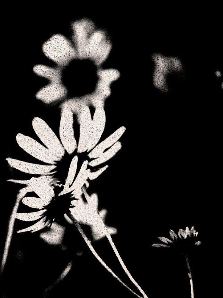 Grunge Flowers by PRAZZI