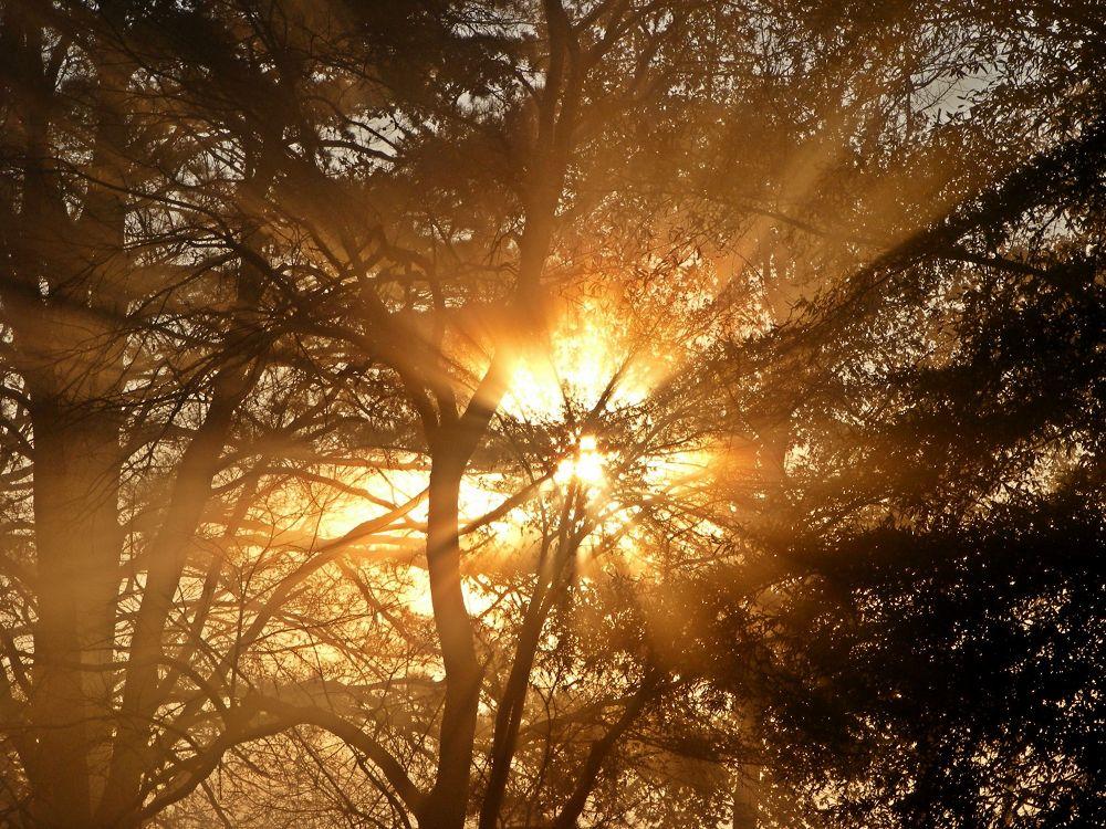 Fog in the Trees by PRAZZI