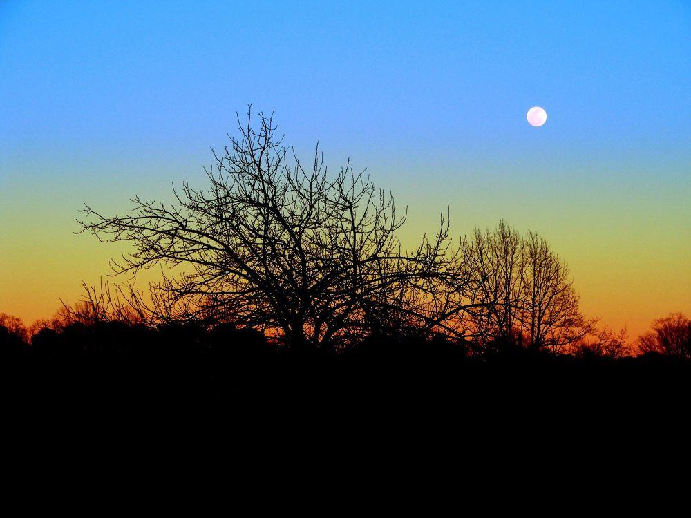 Photo in Landscape #colors #sunset #sun #sky #blue #hues #landscape