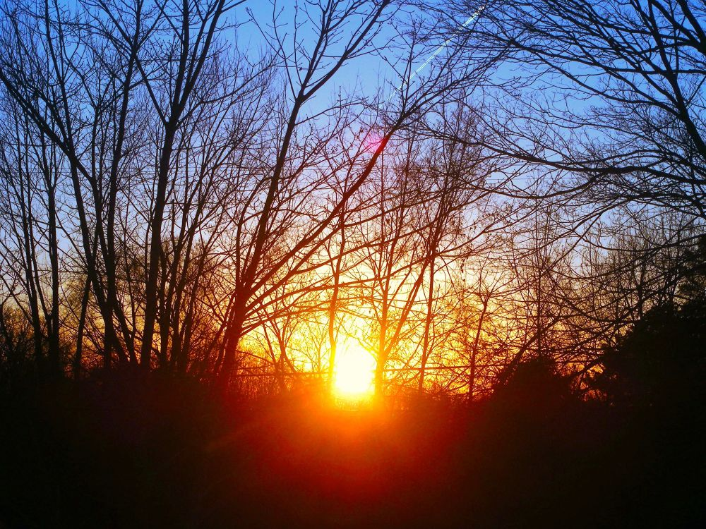 Photo in Landscape #early spring #spring #sunset #sun #trees #landscape