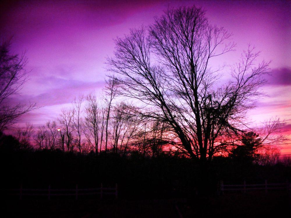 Winter of Purple by PRAZZI