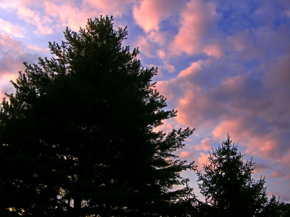 Pink Clouds Over Silhouette by PRAZZI