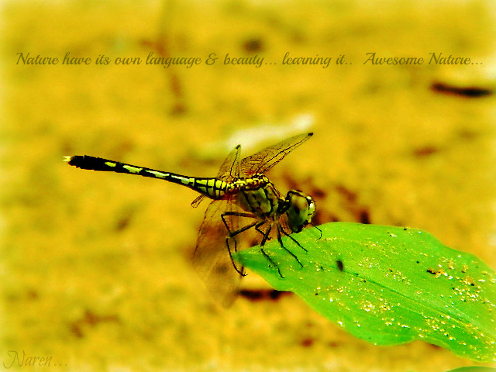 photography tells the story.... by Narendra Kumar