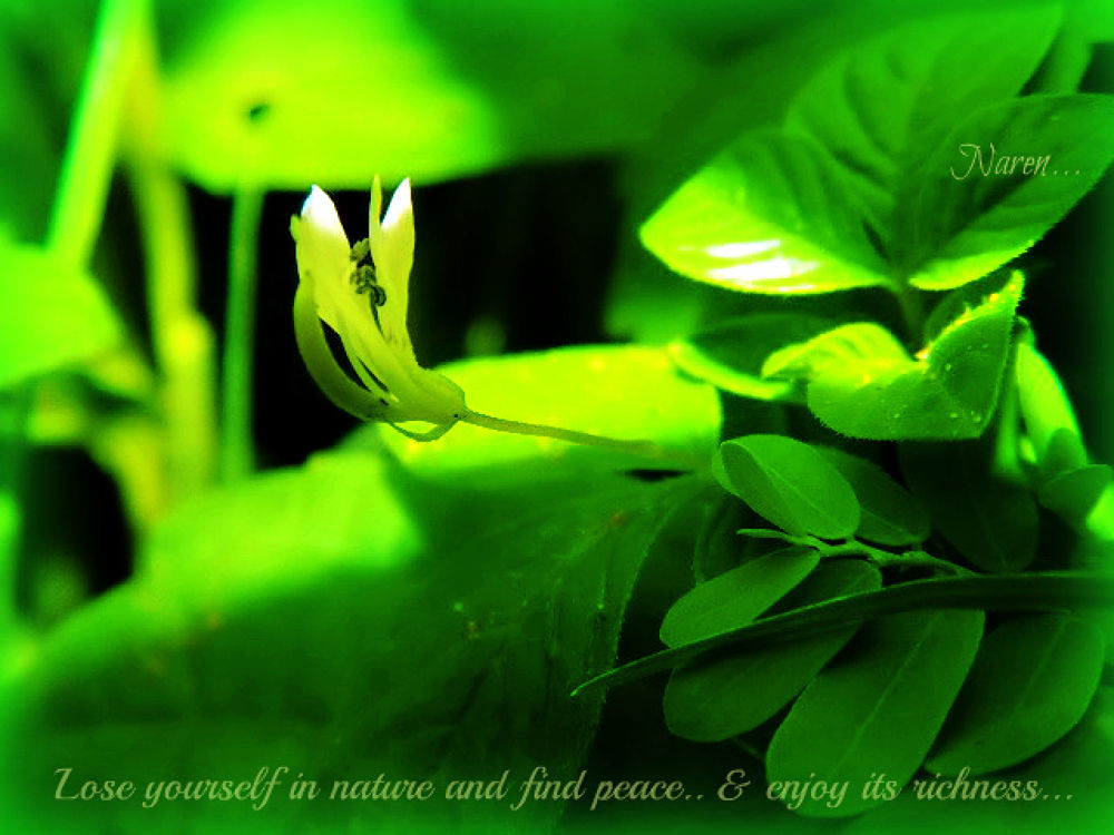 lose urself to nature.... by Narendra Kumar