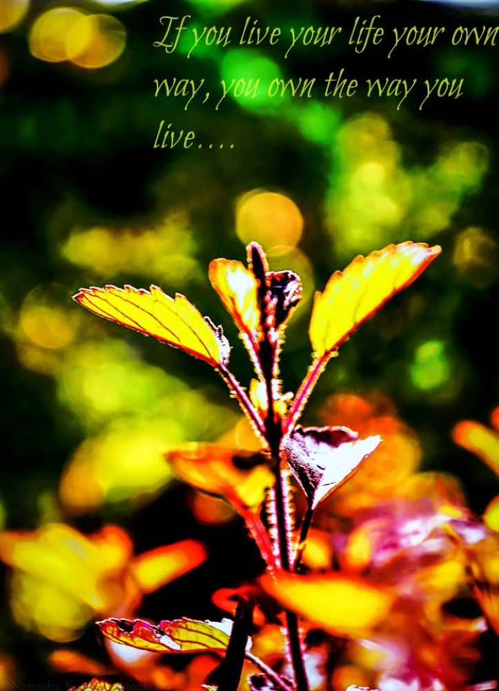 medicated leaves... by Narendra Kumar