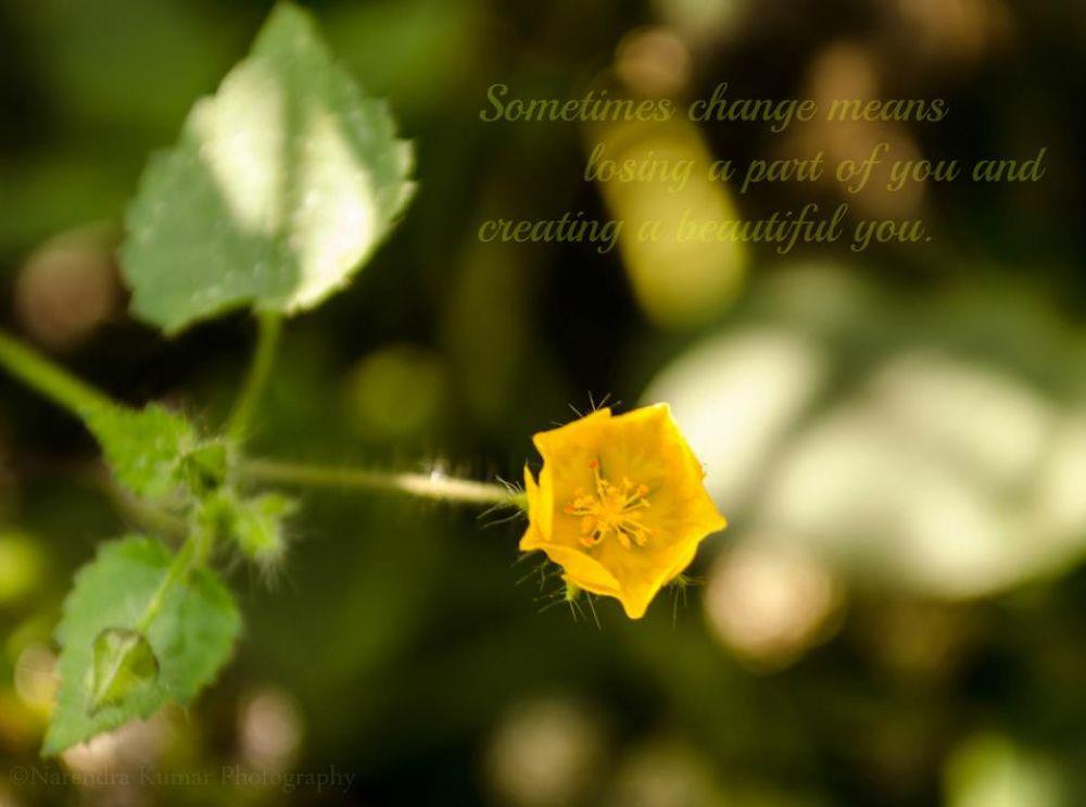 tiny beauty.... by Narendra Kumar