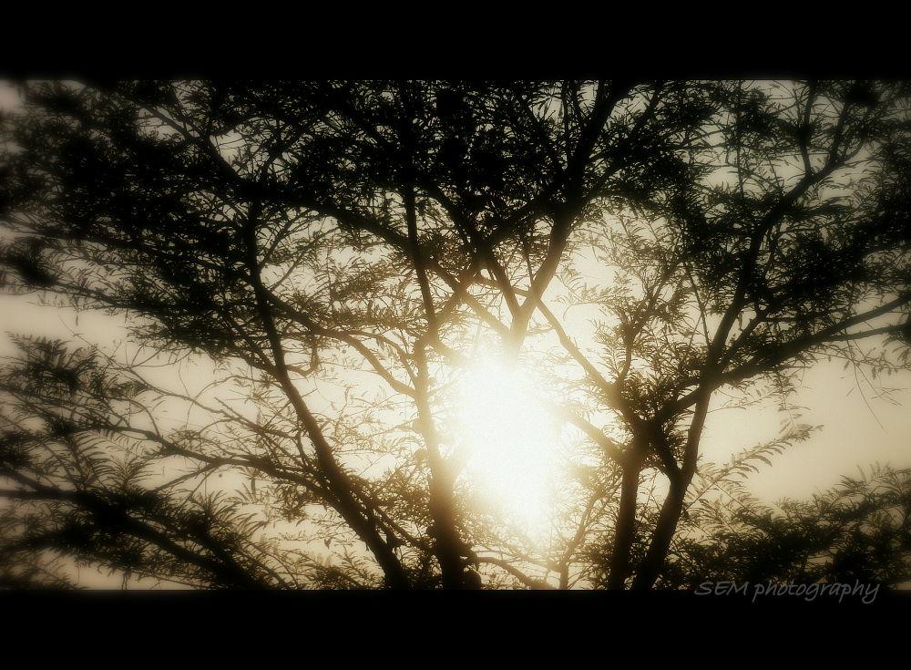 natural - Copy.JPG by sarathmohan376