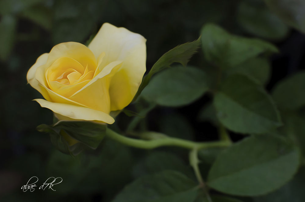 DSC_0396editcrop.jpg by wanfazri