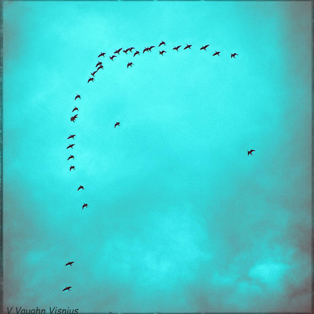 Bird-flight-arc-T-s-w.jpg by VVVcruz