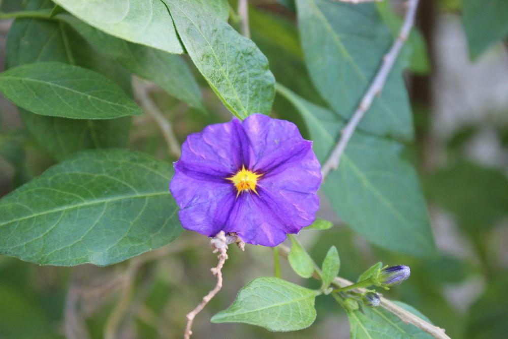 flower by tanyakruger359