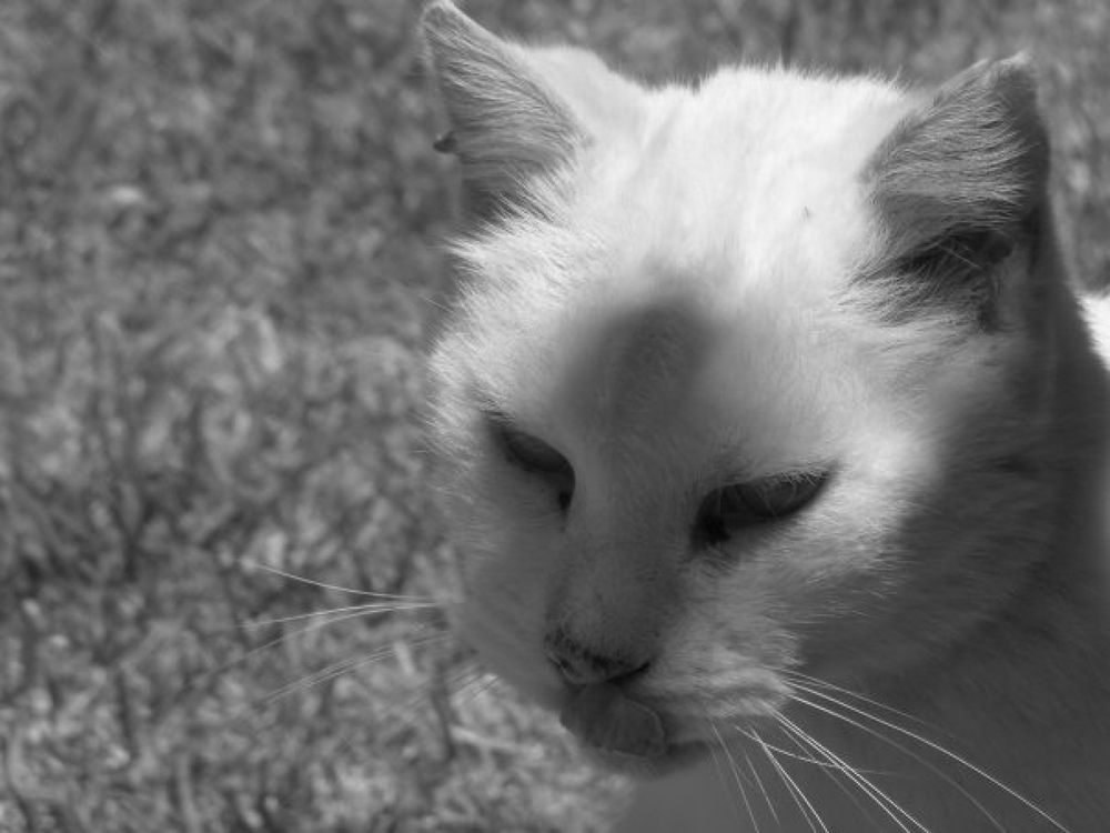 my old cat miss you  by tanyakruger359