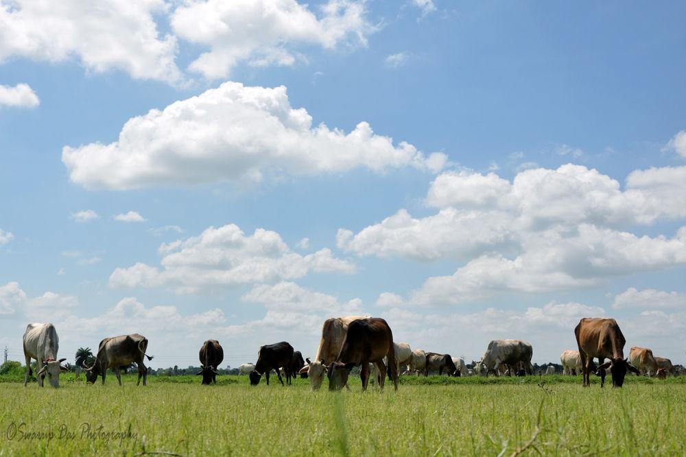 GRASS FIELD.jpg by swarupdas