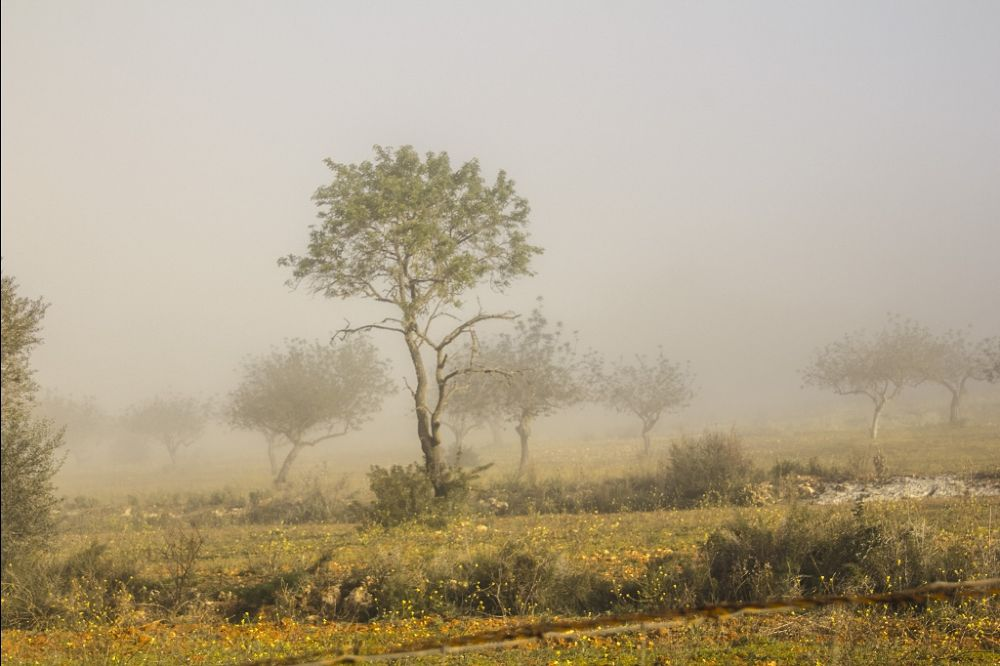 niebla matutina by carmenvich